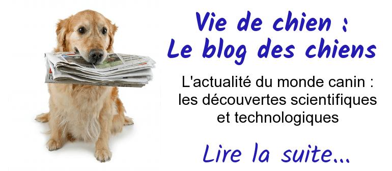 blog chien