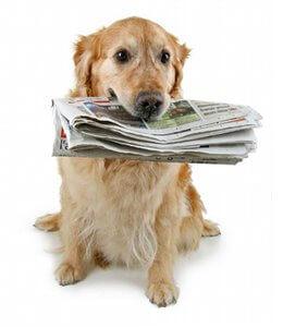 Vie de chien : toute l'actualité du monde canin en un blog