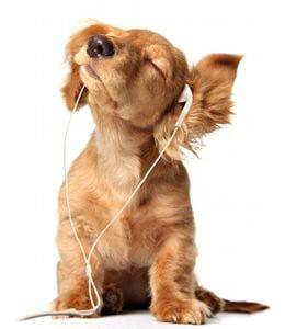 prendre soin chien chiot alimentation hygiene toilettage