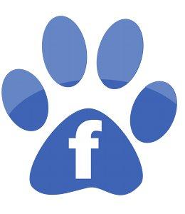 facebook-dresser-son-chien
