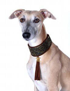 choisir un chien lévrier éclaireur