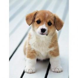 Too cute : l&#8217;émission TV pour<br /> mieux comprendre son chiot