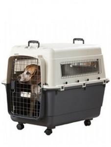 accessoire-caisse-de-transport-chien