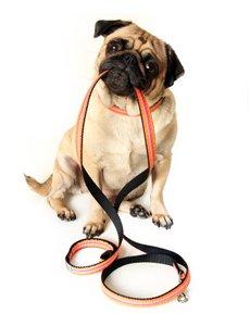 accessoires indispensables arrivee chiot chien