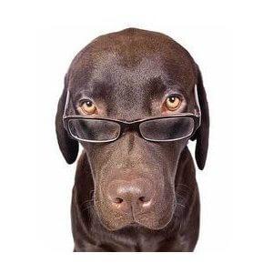 Comment calculer l'âge de son chien ?
