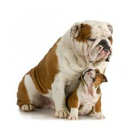 Votre chiot deviendra chien :<br /> et très très vite !