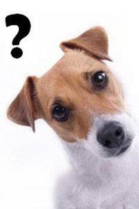 dresser son chien à reconnaitre son nom