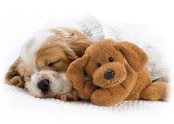 Pourquoi votre chien<br /> dort-il autant ?