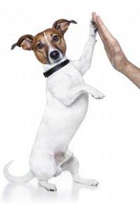 assurer son chien chiot