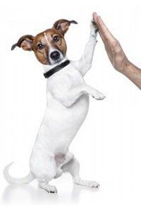 assurer chien