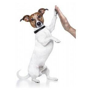 droitier ou gaucher un chien reste un chien