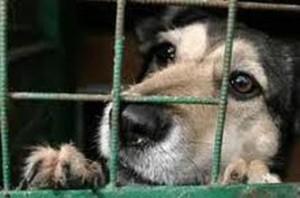 avantages-adopter-un-chien