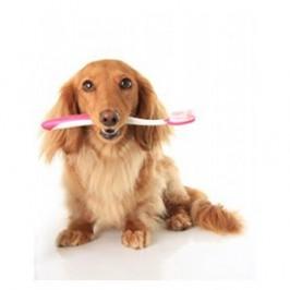 Comment brosser<br /> les dents de son chien ?