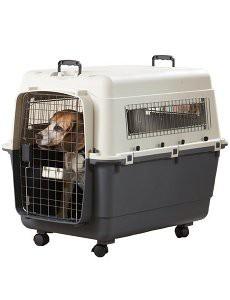 caisse-transport-transporter-chien-voiture