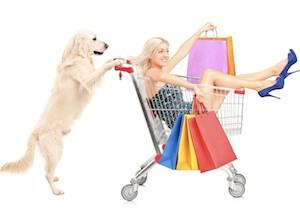 accessoire chien chiot