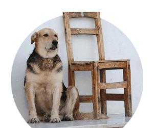 chien-chaise