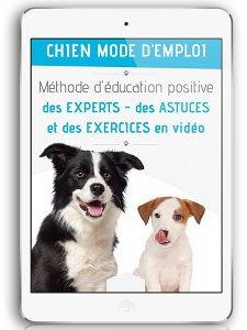 Eduquer son chien avec la méthode chien mode d'emploi