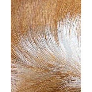 Mon chien perd ses poils !!!