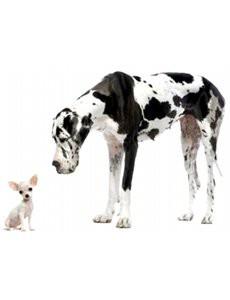 choisir-un-chien