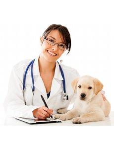 comment choisir veterinaire chiot chien