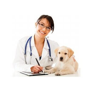 Comment choisir le vétérinaire de son chien ?