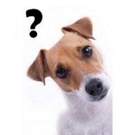 6 questions à se poser<br /> avant d&#8217;adopter un chien