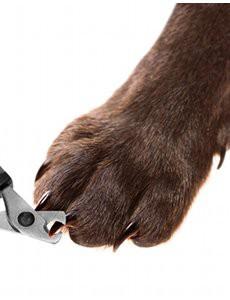 comment-couper-griffes-chien