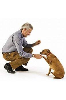 Comment Dresser Son Chiot De 2 Mois - 10 astuces à connaître - Les bases de l'éducation canine - Gratuit