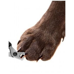 couper griffes chien
