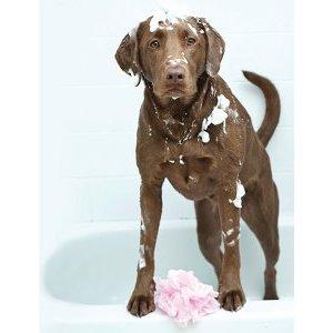 donner-bain-chien