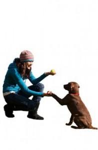 dresser-chien-aider-bien-vieillir