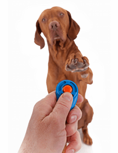 dresser-son-chien-au-clicker