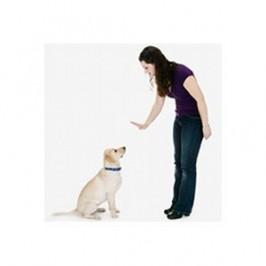 Comment apprendre l'ordre assis à son chien ?