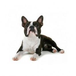 Comment apprendre l'ordre couché à son chien ?