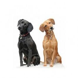 Les principales idées reçues sur les chiens
