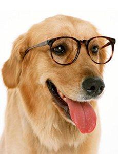 éduquer son chien sans limite