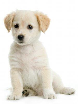 Dresser Son Chien En 15 Minutes Par Jour - 10 astuces à savoir - Les bases de l'éducation canine - 15 minutes par jour