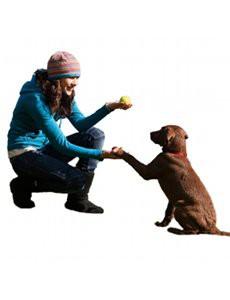idees recues sur chien