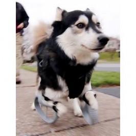 L&#8217;impression 3D au<br /> service des chiens