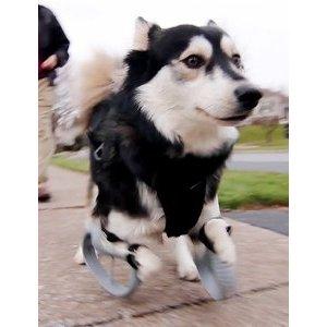 Quand l'impression 3D vient au secours des chiens
