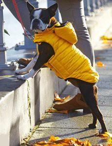 manteau-proteger-chien-froid