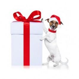 Le meilleur cadeau de Noël<br /> pour votre chien !!!