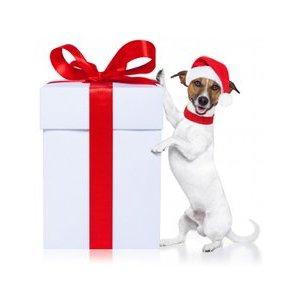 Le meilleur cadeau de noël pour son chien
