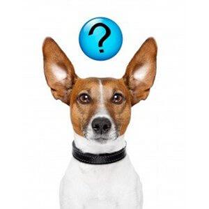 parler le langage des chiens