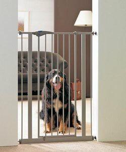 apprendre la propret son chien les erreurs viter. Black Bedroom Furniture Sets. Home Design Ideas