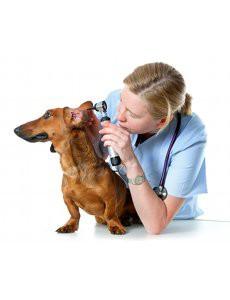 nettoyer-oreilles-chien