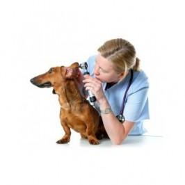Comment nettoyer<br /> les oreilles de son chien ?