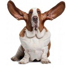nom de chien sonorite