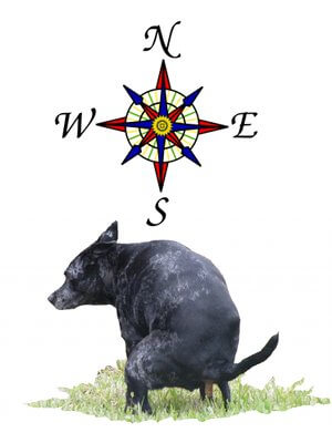 nord-indique-dresser-chien