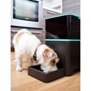 Les objets connectés pour votre chien